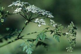 Bonnes et mauvaises herbes