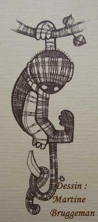 singe-des-flandres-4