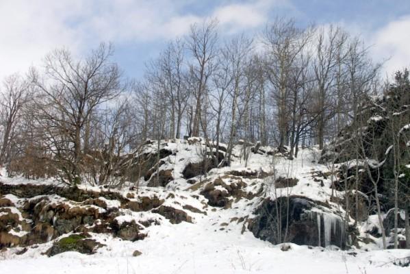 R2 - Forêt en montagne