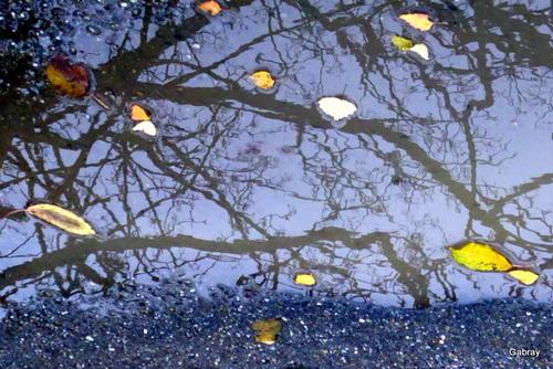 Les flaques aux reflets