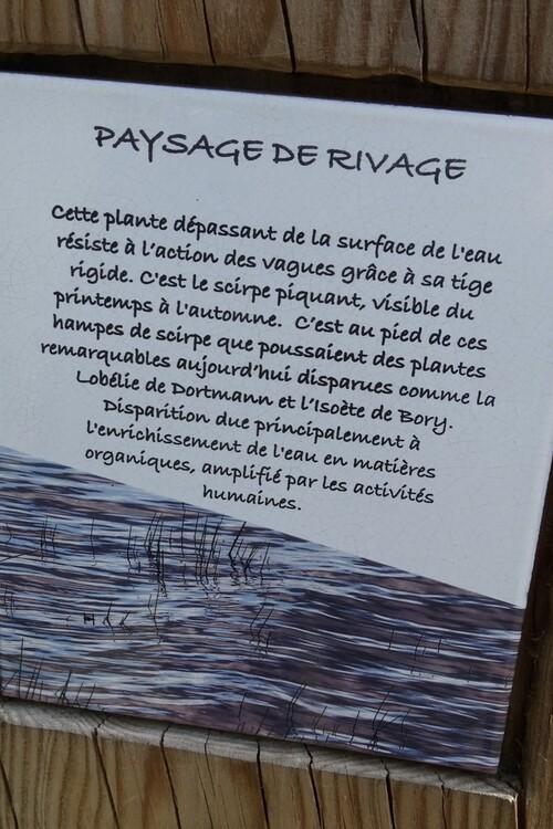 Les kaléïdoscopes du lac de Léon (1/3)...