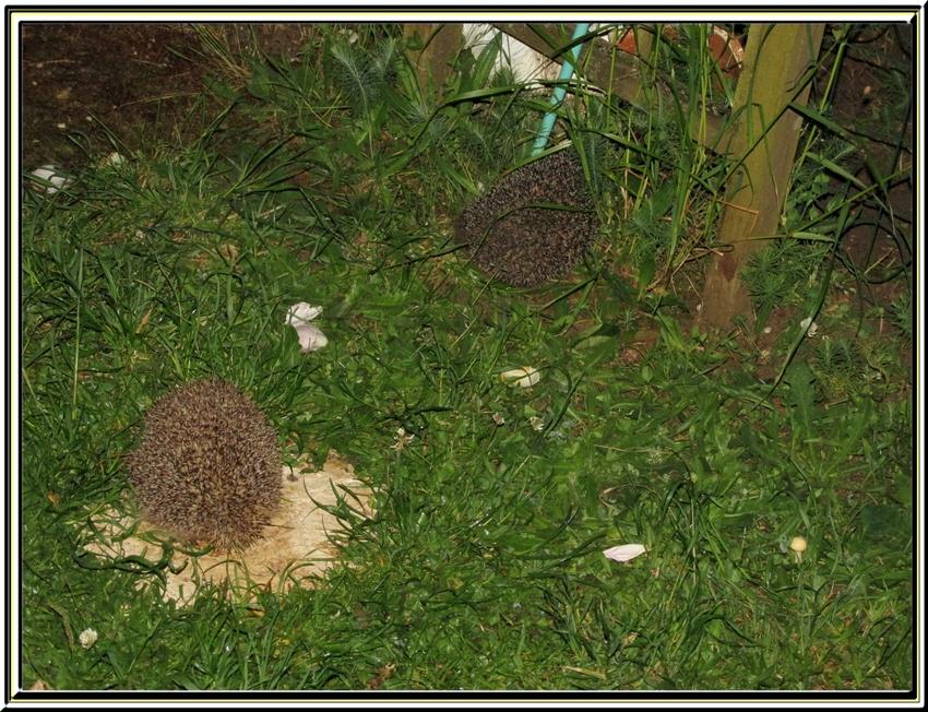 Nos petits visiteurs du soir