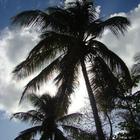 Palmes et nuages - Photo : Gaelpas