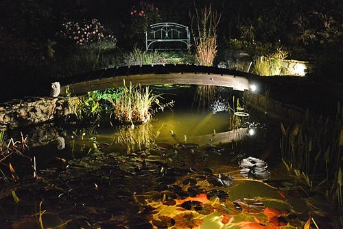 Magical Garden by night