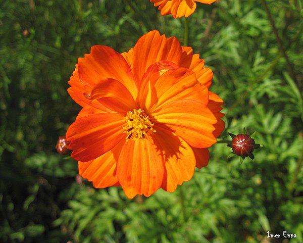 Fleurs-0287---Copie.JPG