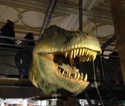 Les MS-GS au Musée d'histoire naturelle
