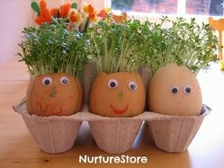Eggheads with cress hair - NurtureStore