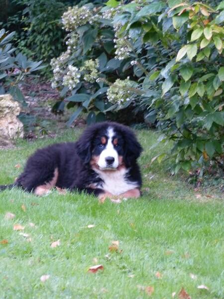 Jasper, 3 mois