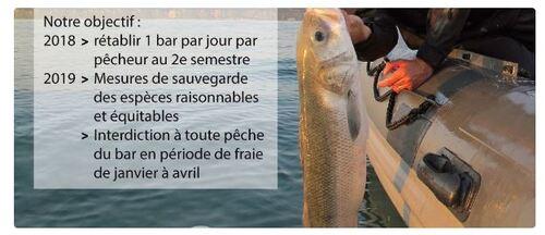 Le GIFAP se mobilise pour la survie de la pêche récréative du Bar.