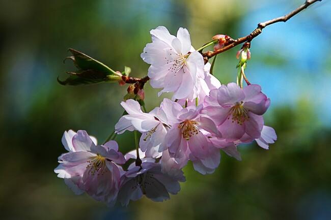 Beauté de la nature * les fleurs