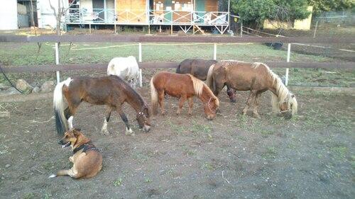 6 nouveaux poneys!