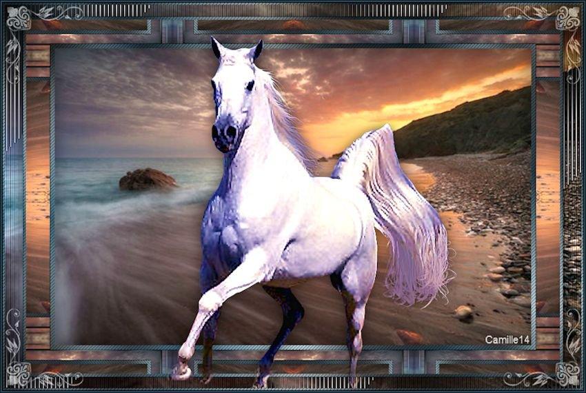 Horse 190530100817511892