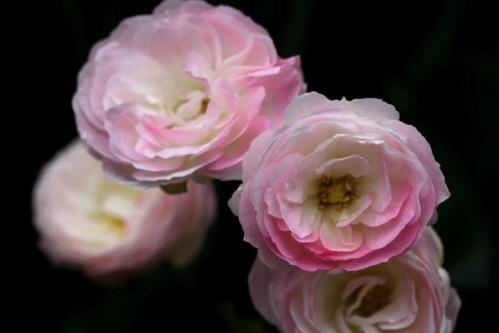 Bouquet Parfait0