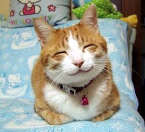 Photos humour : les chats font la loi ! Nos amis les chats sont craquants, malins et rusés, voici des photos de leurs exploits..