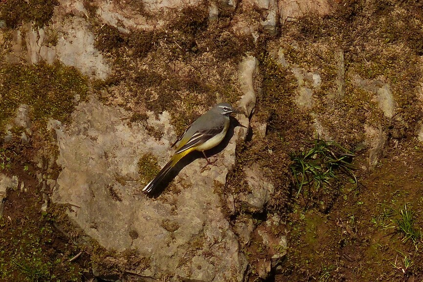 Mes rencontres ornithologique