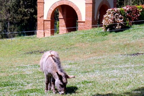 Notre municipalité innove: les 2 ânes!