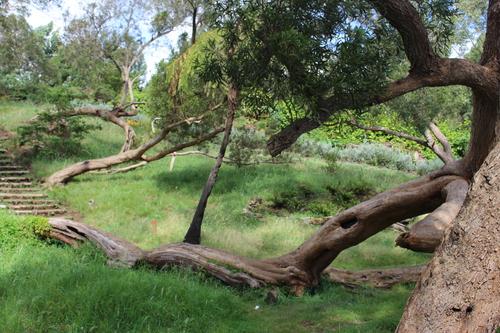 Une magnifique forêt de tamarins
