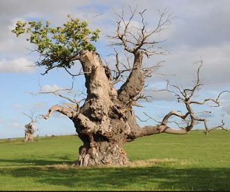 Les arbres et la mort ...
