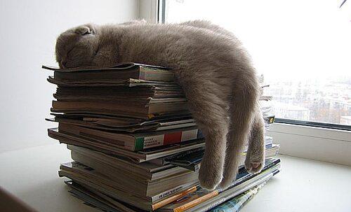 03 - Des chats et des livres - douce sieste