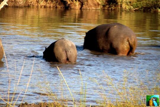 Afrique du Sud: suite du safari 2/3