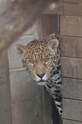 Parc animalier Bouillon 2013 399