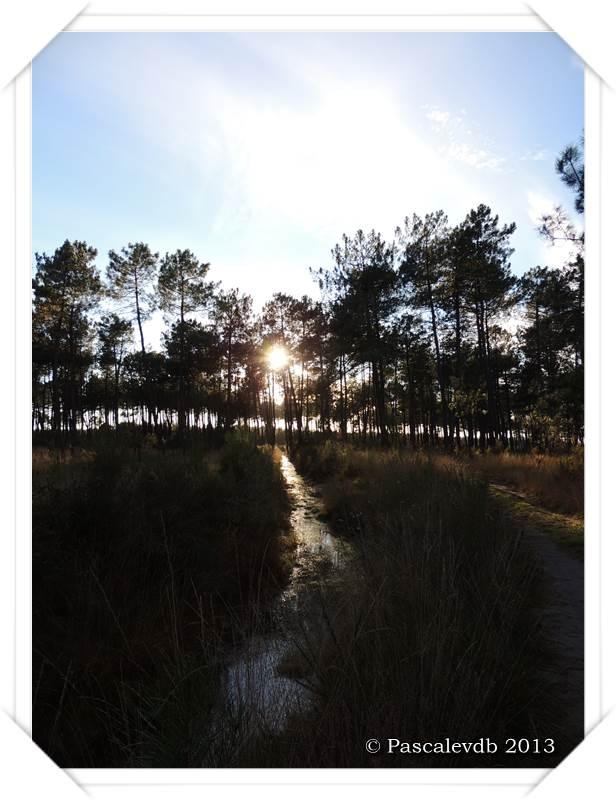 Promenade en forêt à la lisière du Barp - 4/5