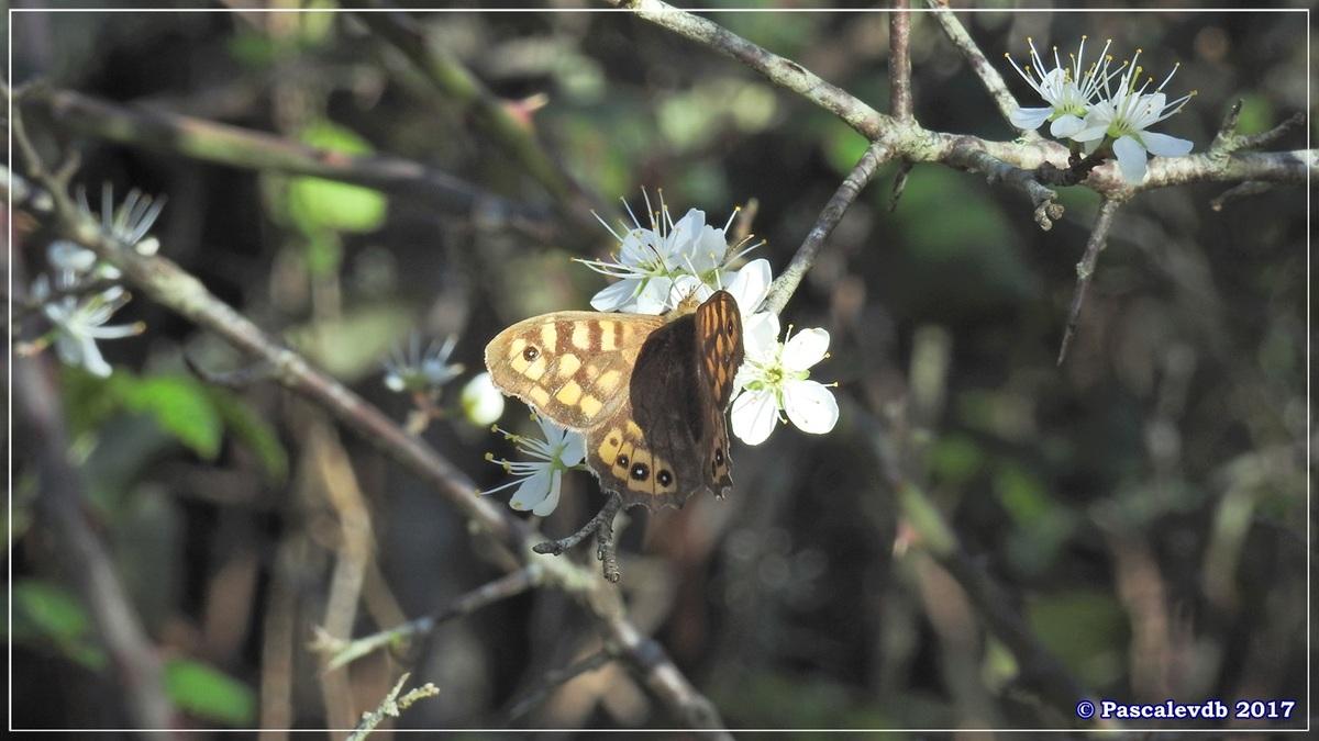 Balade au port du Rocher à Gujan Mestras en Mars 2017 - 9/10