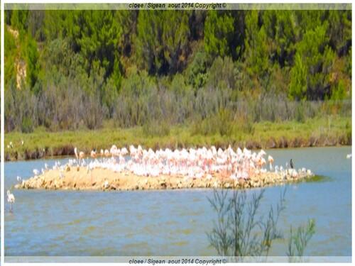 Réserve Africaine de SIGEAN ( Vacances 2014 a St Cyprien)4