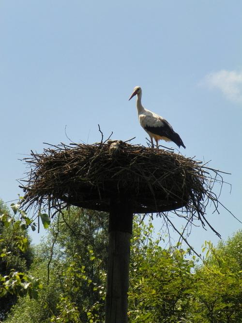 Le parc des Oiseaux à Villars-les-Dombes ( 8 )