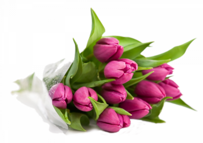 Fleurs tulipes /1