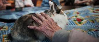 Maisons de retraite : les animaux font d'excellents auxiliaires de vie