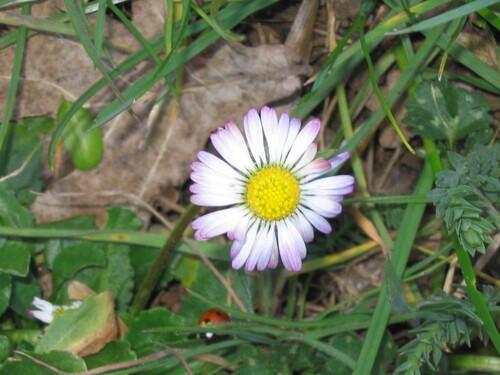 Le pré fleuri