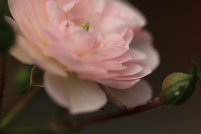 Dernières douceurs roses de l'été