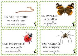 Vocabulaire - Les petites bêtes