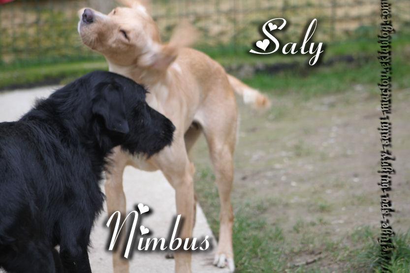 Saly et Nimbus