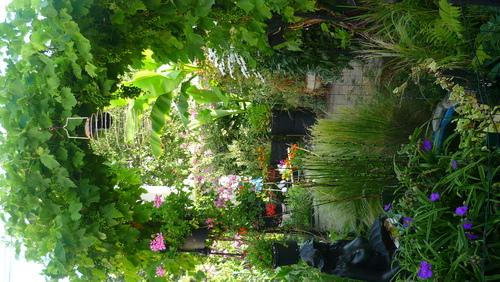 Jardin De Juillet