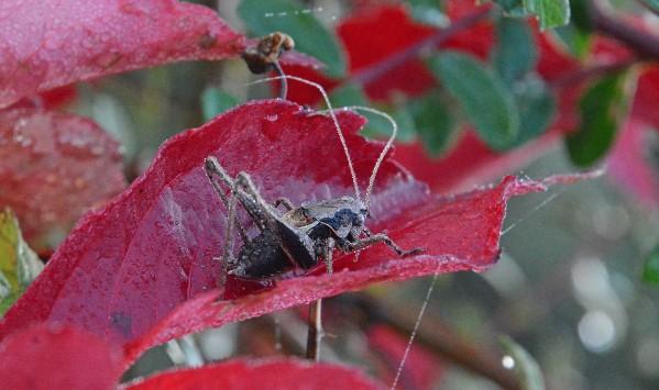 Insectes-papillons-5-3065.jpg