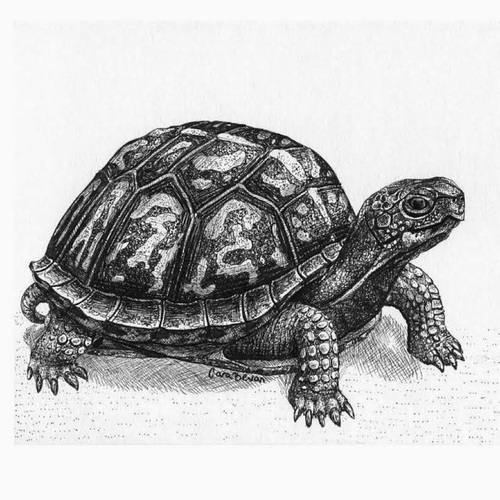 SC & More No 260 : une tortue