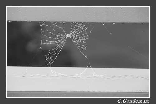 Toile d'araignées # 1