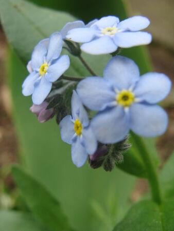 Macro_fleurs_du_jardin__29_