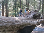 Kings Canyon et Sequoi National Parks (25 juillet)