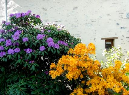 LA ROCHE AUX MOINES RANDO EN LIGNE DU 12/05/17