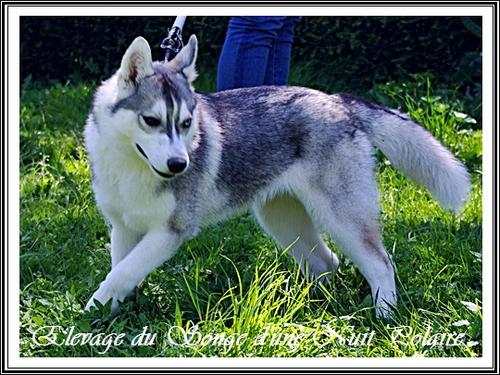 Inouk (5 mois)