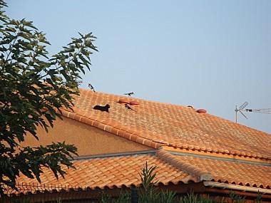 Spectacle-sur-le-toit-VIII-2011-DSC02101.JPG