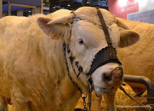 2 mars 2012 Salon de l'Agriculture 1