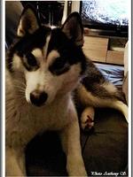 Laïdja (9 mois)