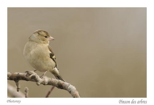 Les oiseaux du moment