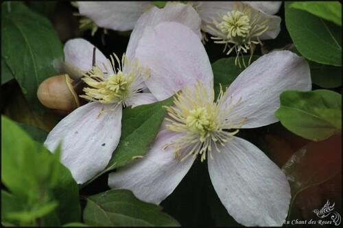 Promenade de fleurs en fleurs(2)