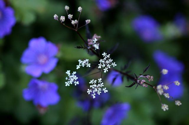 Le jardin comme exutoire (9)