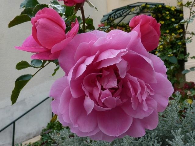Metz en fleurs 6 mp1357 2011